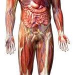 Hliník v lidském těle